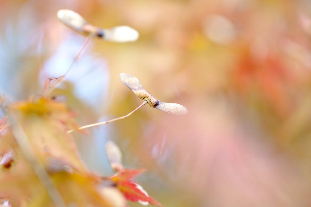 秋なのね~
