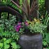 Garden! Garden!