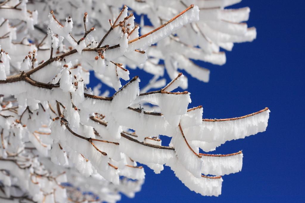 雲仙 樹氷