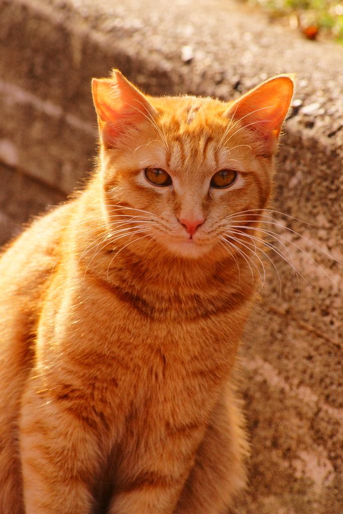猫ポートレート No.001