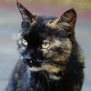 猫ポートレート No.005