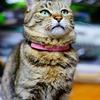 猫ポートレート No.004
