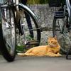 自転車の管理 承ります