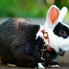 さんぽウサギ
