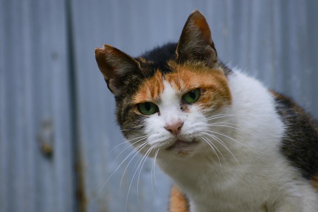 猫ポートレイト No.013