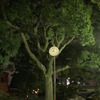 木と時計の背比べ