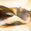(4) ガラス越しに眠る猫