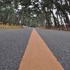 松の並木道