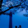 東京スカイツリー ~彼女とボクと、時々、桜~