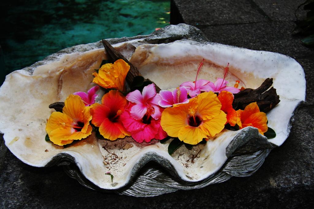 貝 と 花
