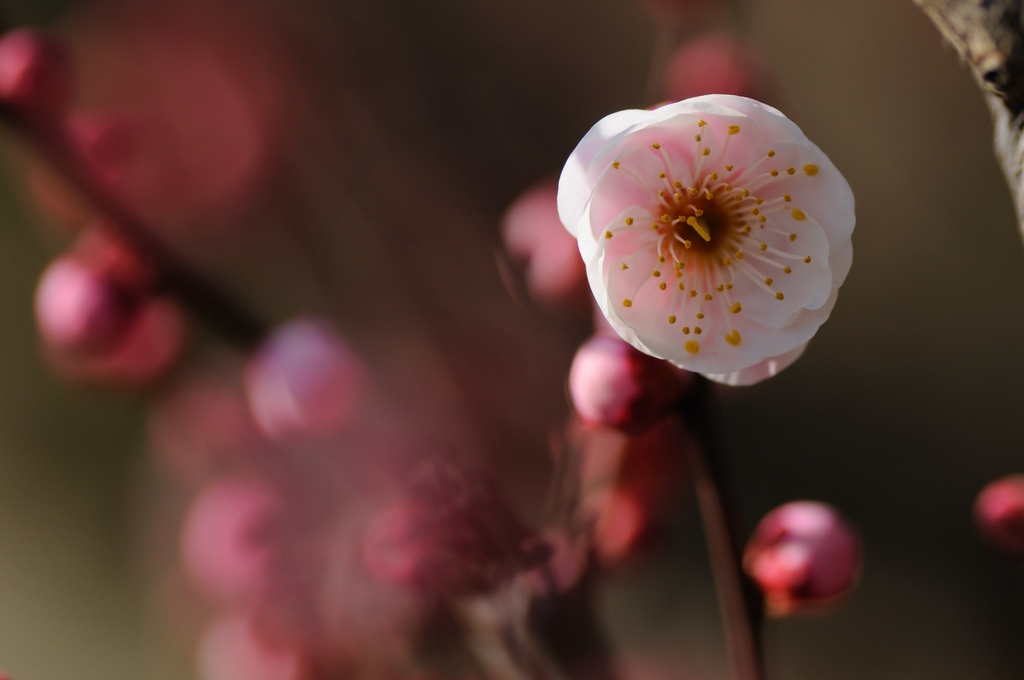春のまなざし