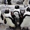 ペンギン四天王