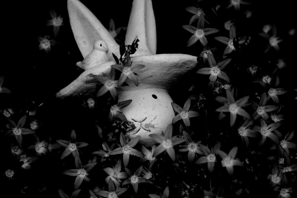 rabbit star