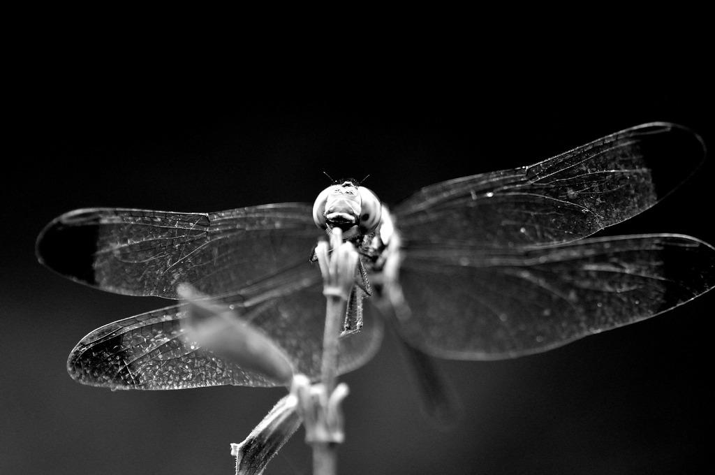 透過する羽