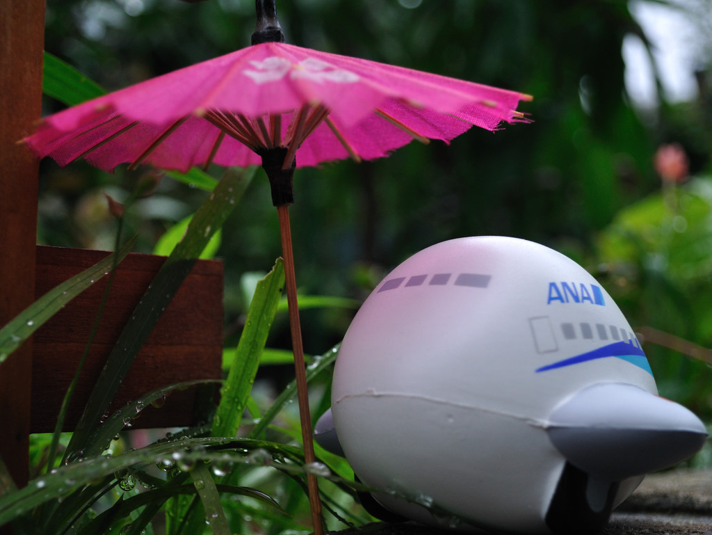ANA様 雨が.......