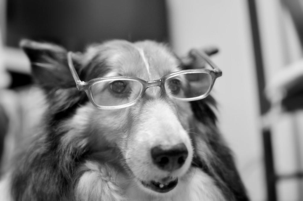 老眼鏡のお年頃