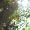 森のひざし