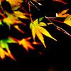 色付きの季節