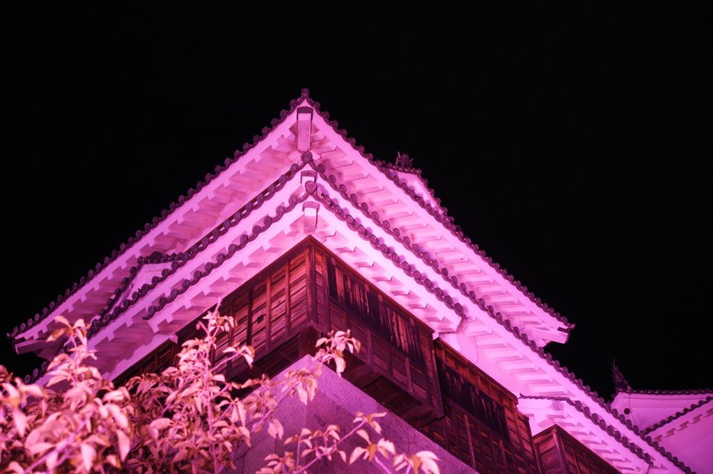 紫色のライトアップ