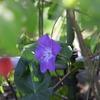日陰の片隅に花を咲かせる