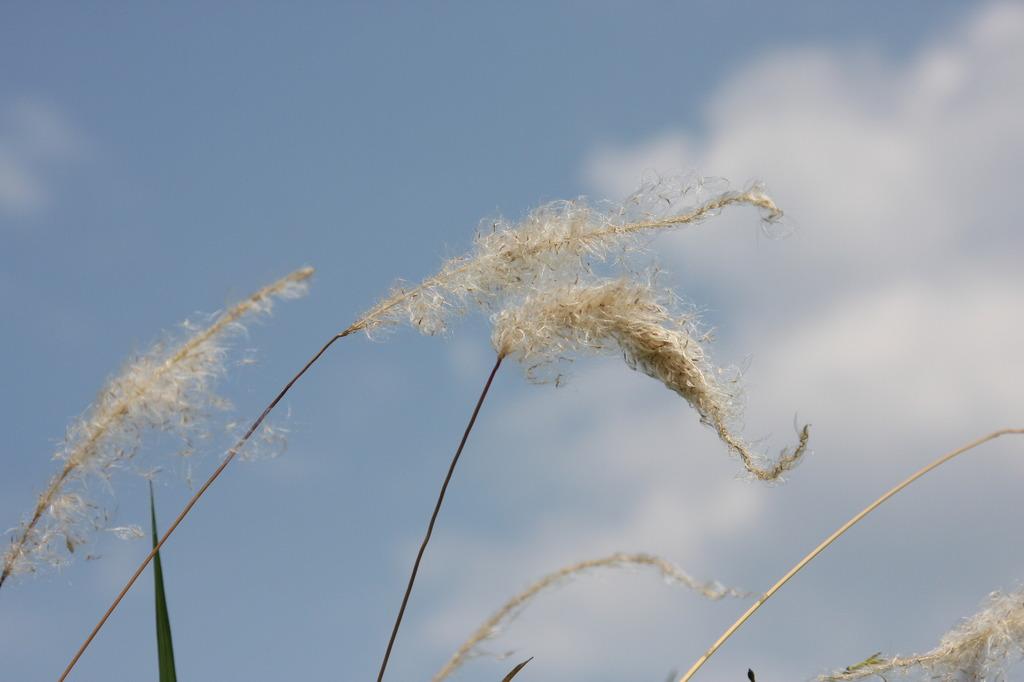 風になびいて