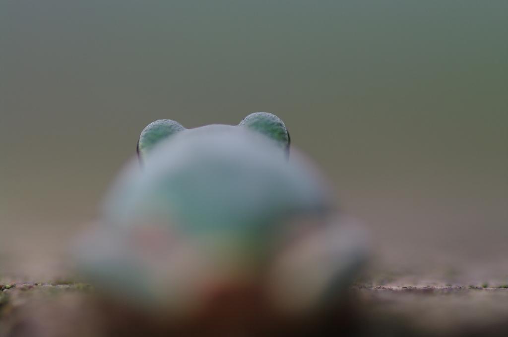 カエルさん