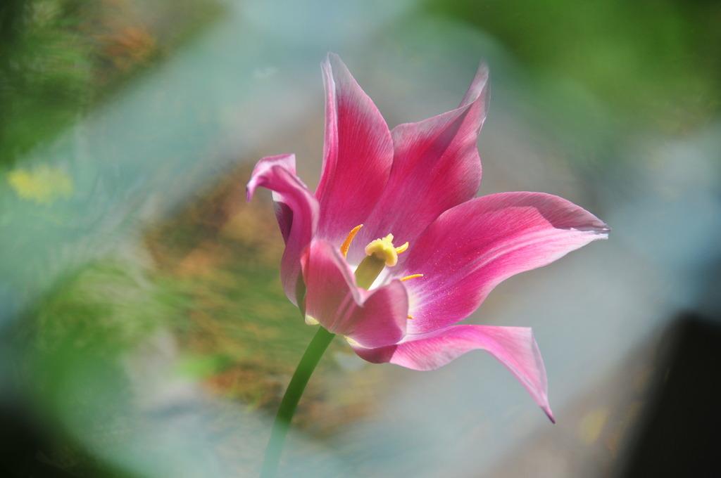 ネット越しの花