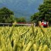 ★収穫への期待☆