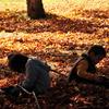 落ち葉の戯れ