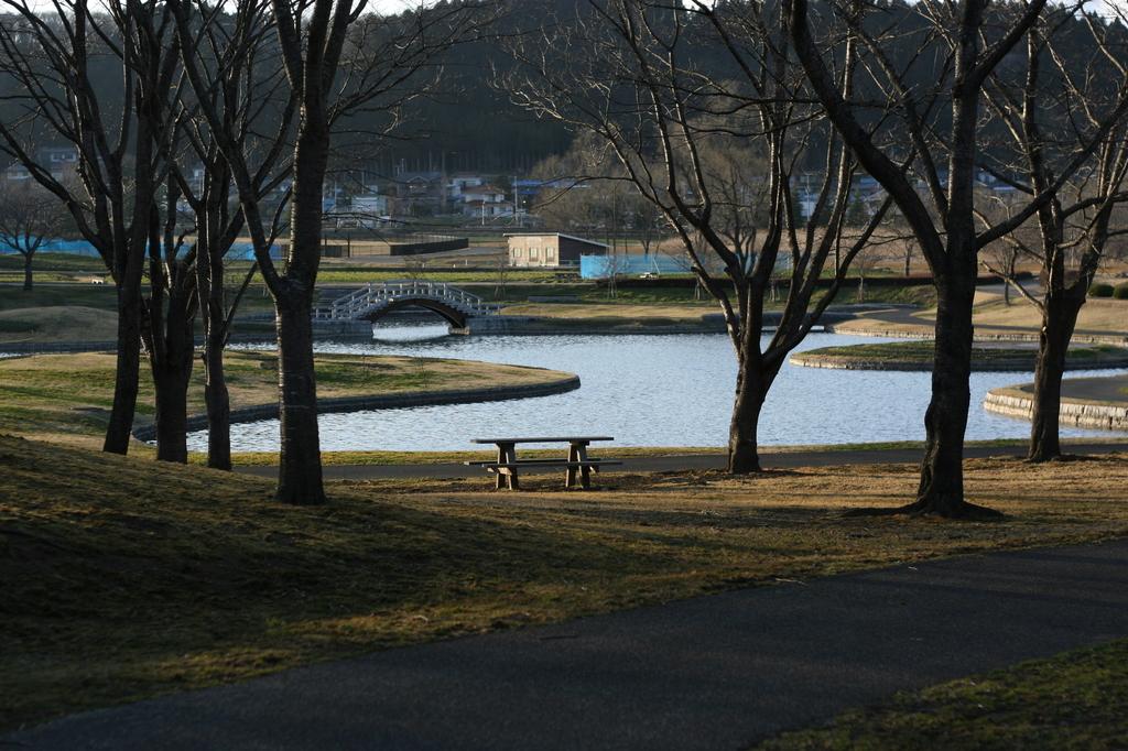 春を待つ公園