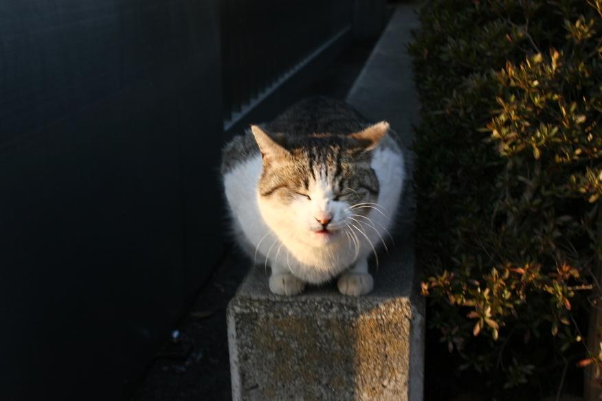偶然出会った猫