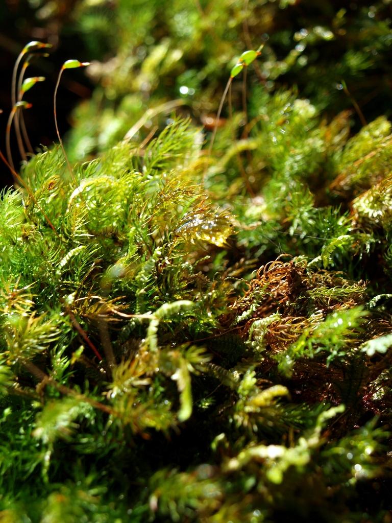 Mossy, Mossy Green