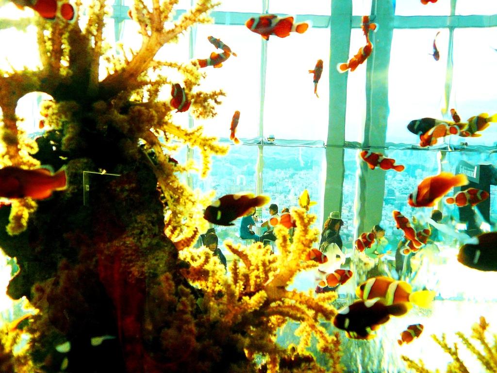 Sky Aquarium