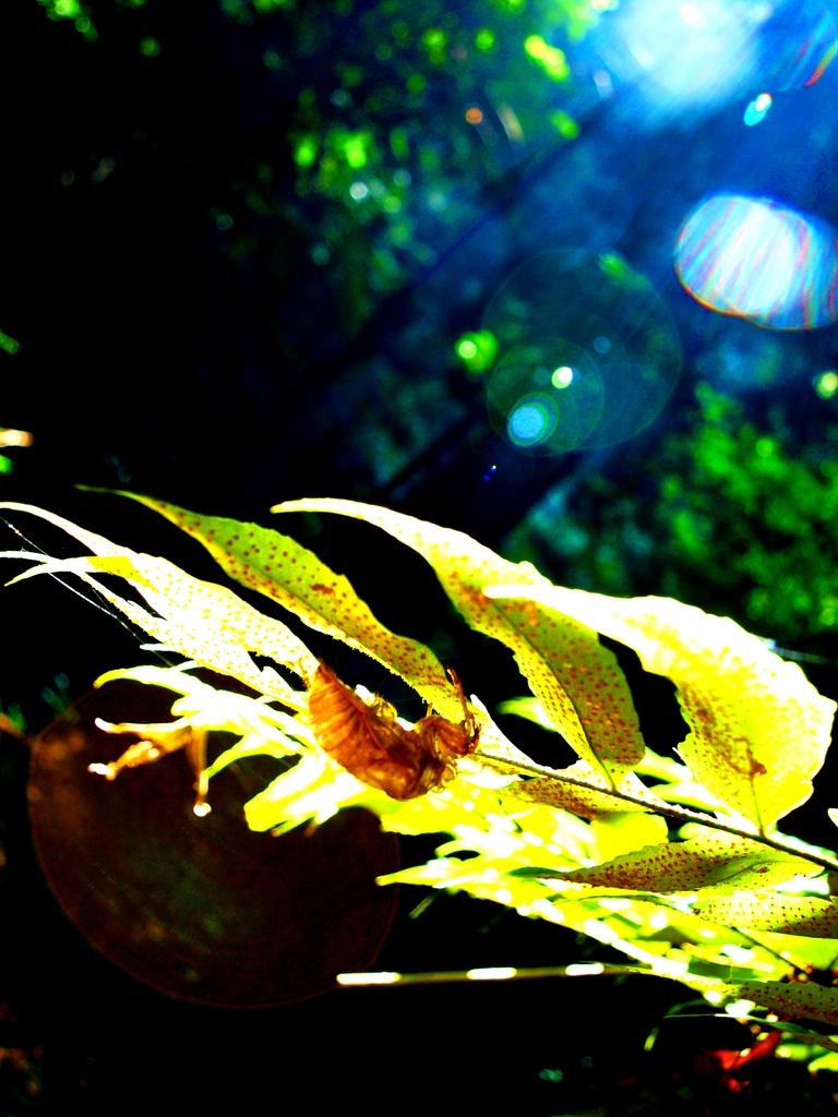 夏の終わりの輝き