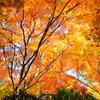 秋の安芸の宮島-5