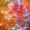 秋の安芸の宮島
