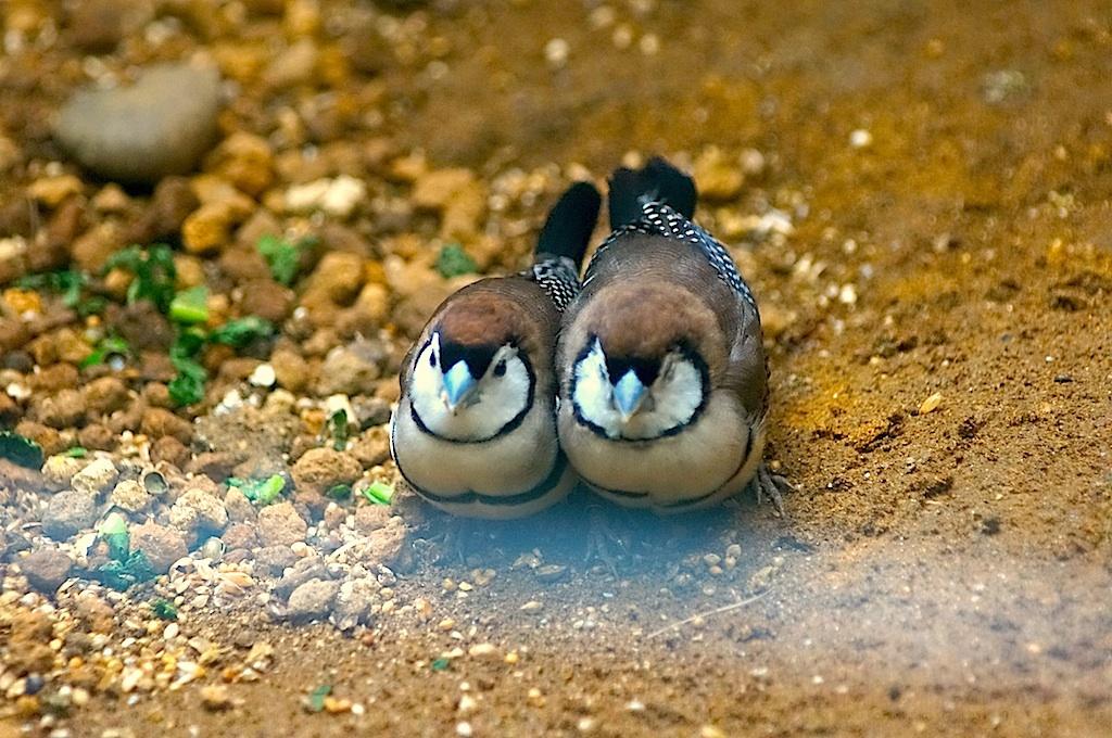 寄り添う鳥