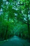 参道は木々にサンドされてるから参道なのか