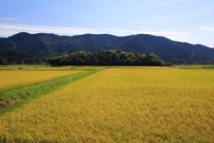 収穫の季節