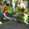 ハワイの鳥さん