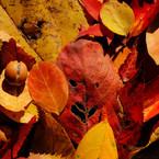 秋の小悪魔