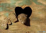 ミッキーマウス♪