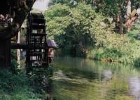 朝の水車小屋 (フィルムスナップ)