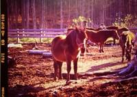 PENTAX 645で撮影した(木曽馬の昼下がり (フィルムの残像))の写真(画像)