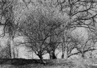 春への想い (フィルムの残像)