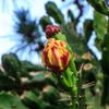 サボテンの花が咲くころ