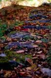 石段に落ち葉のお化粧