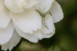 白い花に虫