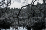 冬枯れの樹 其の二