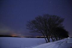 星空の下の並木道
